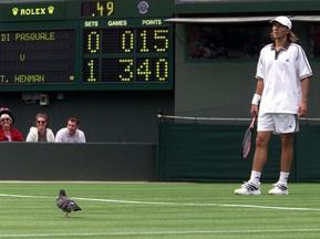 На Уїмблдоні голубів тричі на тиждень розполохує яструб