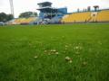 На домашнем стадионе Говерлы выросли грибы
