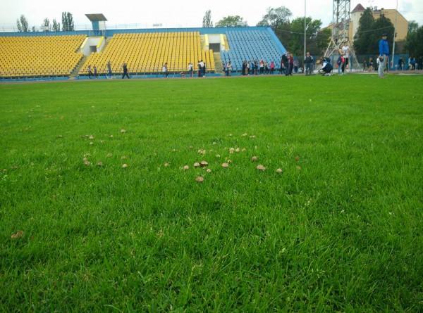 Грибы на стадионе в Ужгороде