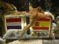 Труженик моря. Памяти осьминога Пауля (2008 - 2010)