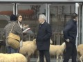 Над президентом Атлетико пошутили и заставили его оборонять стадион от стада овец