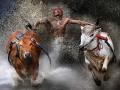 На пределе возможного. Лучшие спортивные снимки по версии  World Press Photo
