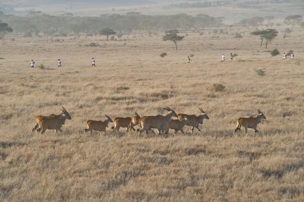 Дикий марафон ради сохранения дикой природы