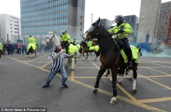 Фанат набросился с кулаками на лошадь