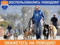 Собачки на поводке: Мариуполь осудил клубы, проголосовавшие в пользу Динамо