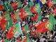 Португальская торсида в ЮАР весьма многочисленна