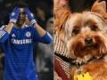 Футболист Челси случайно убил свою собаку