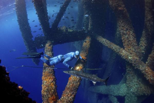 Нефтяная вышка притягивает рыбу, как магнит