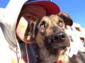 Американский спортсмен приютил у себя щенков, найденных в Сочи (ФОТО, ВИДЕО)