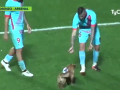 Собака-забивака прервала матч чемпионата Аргентины и покусала микрофон