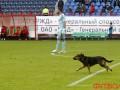 Локомотив оштрафуют за появление собаки на поле (видео)