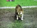 Кот, остановивший матч Ливерпуля и Тоттенхэма, стал звездой интернета