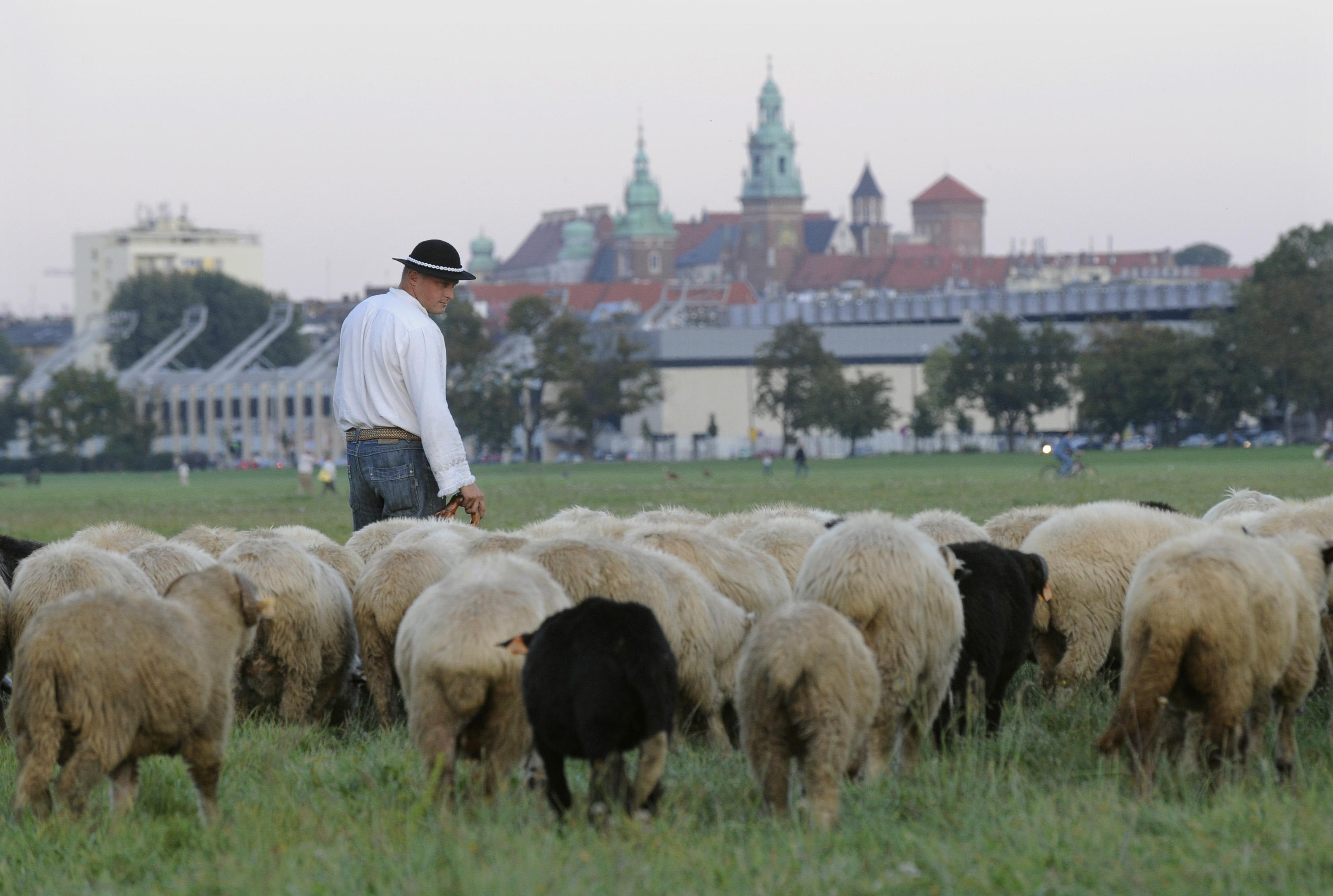 В окрестностях Кракова голландцев ждет настоящая идиллия