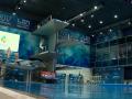 Киев примет юниорский чемпионат мира по прыжкам в воду