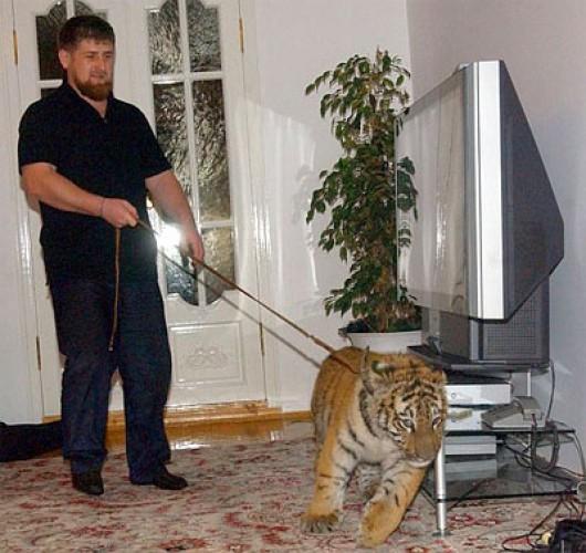 Кадыров и тигр