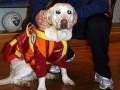 Собака Тотти спасла двух тонущих людей