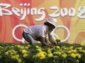 Пекин украсили 40 миллионов цветов