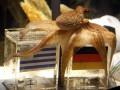 Последователи Пауля. В Польше к Евро-2012 будет свой осьминог-оракул