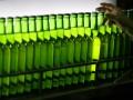 Чилийцев выгнали из сборной за пьянство