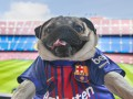 Самый милый фанат Барселоны разорвал просторы интернета