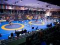 Чемпионат Европы по борьбе-2020: полные результаты украинцев
