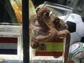 Шакира доверяет осьминогу Полу