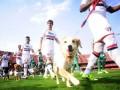 В Бразилии футболисты вышли на поле с собаками вместо болбоев