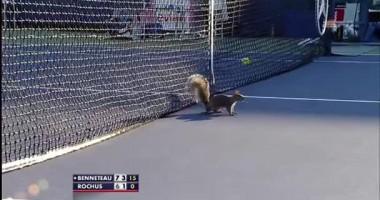 Crazy Squirrel. Белка вторгается на матч US Open
