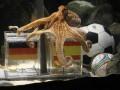 Ответ Паулю. Результаты матчей Евро-2012 предскажет украинский осьминог-оракул