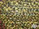 Для Фанов сборной Ганы чувство локтя - не пустые слова