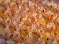 Фотогалерея: Как открывали Паралимпиаду в Сочи