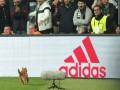 УЕФА накажет Бешикташ из-за кота, который приостановил матч с Баварией