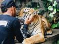 Защитники животных раскритиковали Хэмилтона за фото с тигром