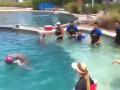 Ныряльдо. Дельфин забивает гол вратарю Барселоны
