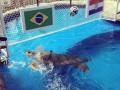 Бразилия - Хорватия: черепаха назвала победителя матча открытия