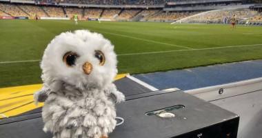 Проявление расизма?: Фанаты Динамо сбросили сов на поле в матче с Шахтером