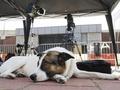 Спортивные журналисты: Осторожно, приближаются собаки