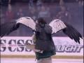 Огромная птица чуть не сорвала хоккейный матч