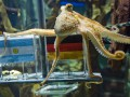 Фотогалерея: Памяти осьминога Пауля (2008 - 2010)