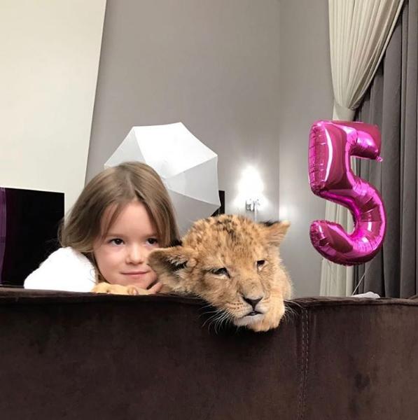 Дмитрий Комбаров арендовал льва для пятилетней дочери