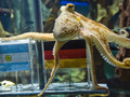 У осьминога Пауля появился собственный рекламный агент