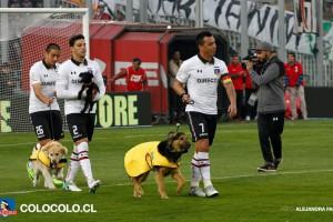 Футболисты чилийского клуба вышли на поле с собаками из приюта